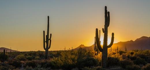 Saguaro kaktusz a legnagyobb