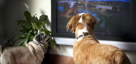 Tévéző kutyák színlátása