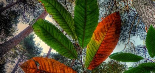 őszi falevél színváltozása