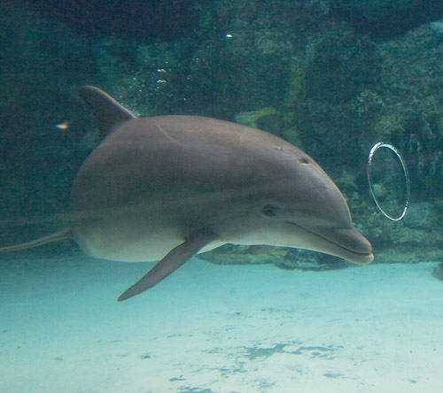 delfin milyen látomás