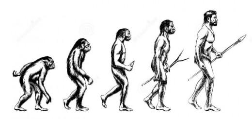 emberi faj