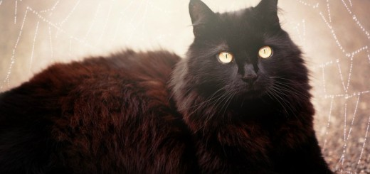 fekete macska babona