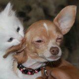 macskák,macska és kutya